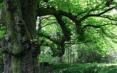 Recensement des arbres, arbustes et haies remarquables