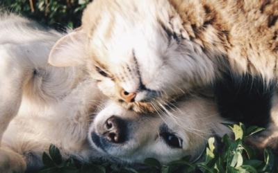 DogIDet Cat ID pour rendre vos données visibles!