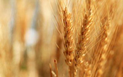 AVIS AUX AGRICULTEURS – Commission de Constat de Dégâts aux Cultures
